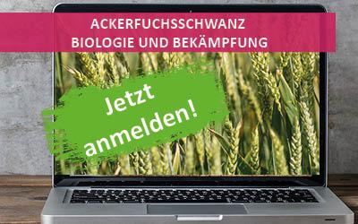 Online-Infoabend: Ackerfuchsschwanz