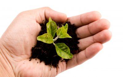 Sachkundepflanzenschutz-Schulung